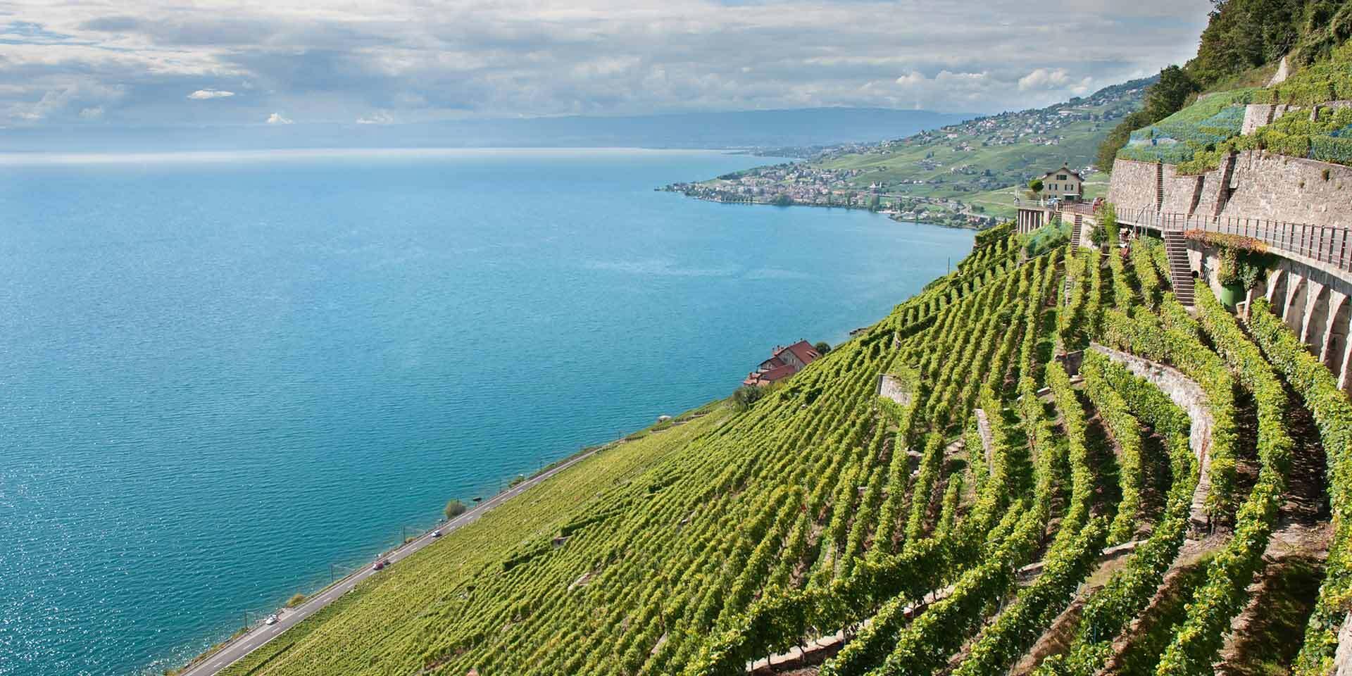 In den Weinbergen von Lavaux entstehen Schweizer Weine